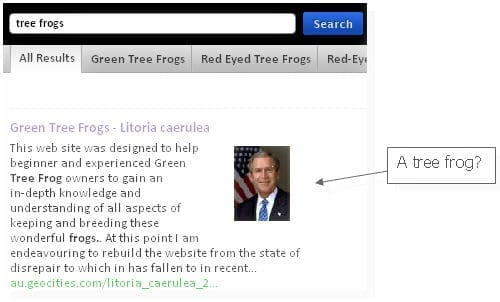 cuil-george-bush-tree-frog